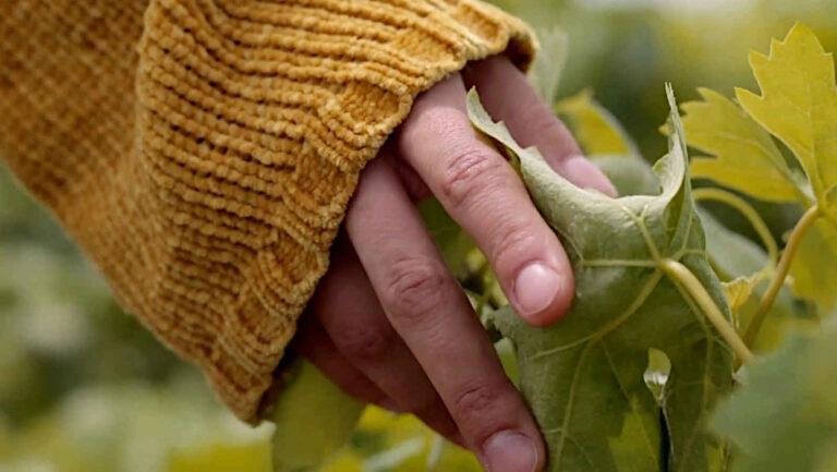 Agrobotiga de Garriguella